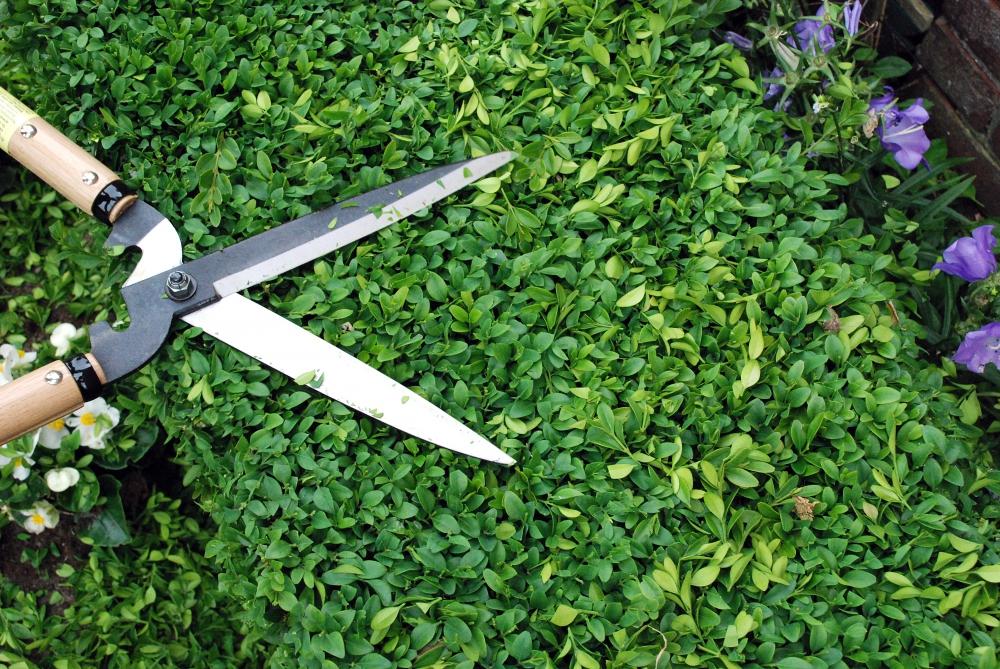 Hedge shears okatsune 231 short handled long bladed for Lightweight long handled garden shears