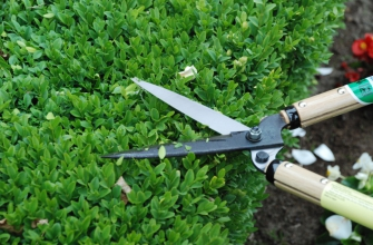 Shrub shears