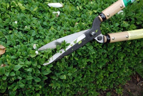 Buxusschaar okatsune 216 korte handgrepen met korte bek shop okatsune europe - Model bibliotheek houten ...